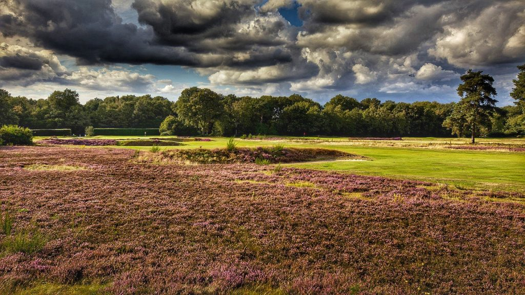 Walton Heath - Old